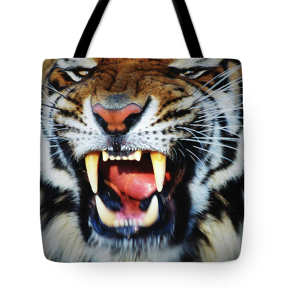 Snarling Tote Bag featuring the photograph Bengal Tiger Panthera Tigris Tigris by Mike Hill