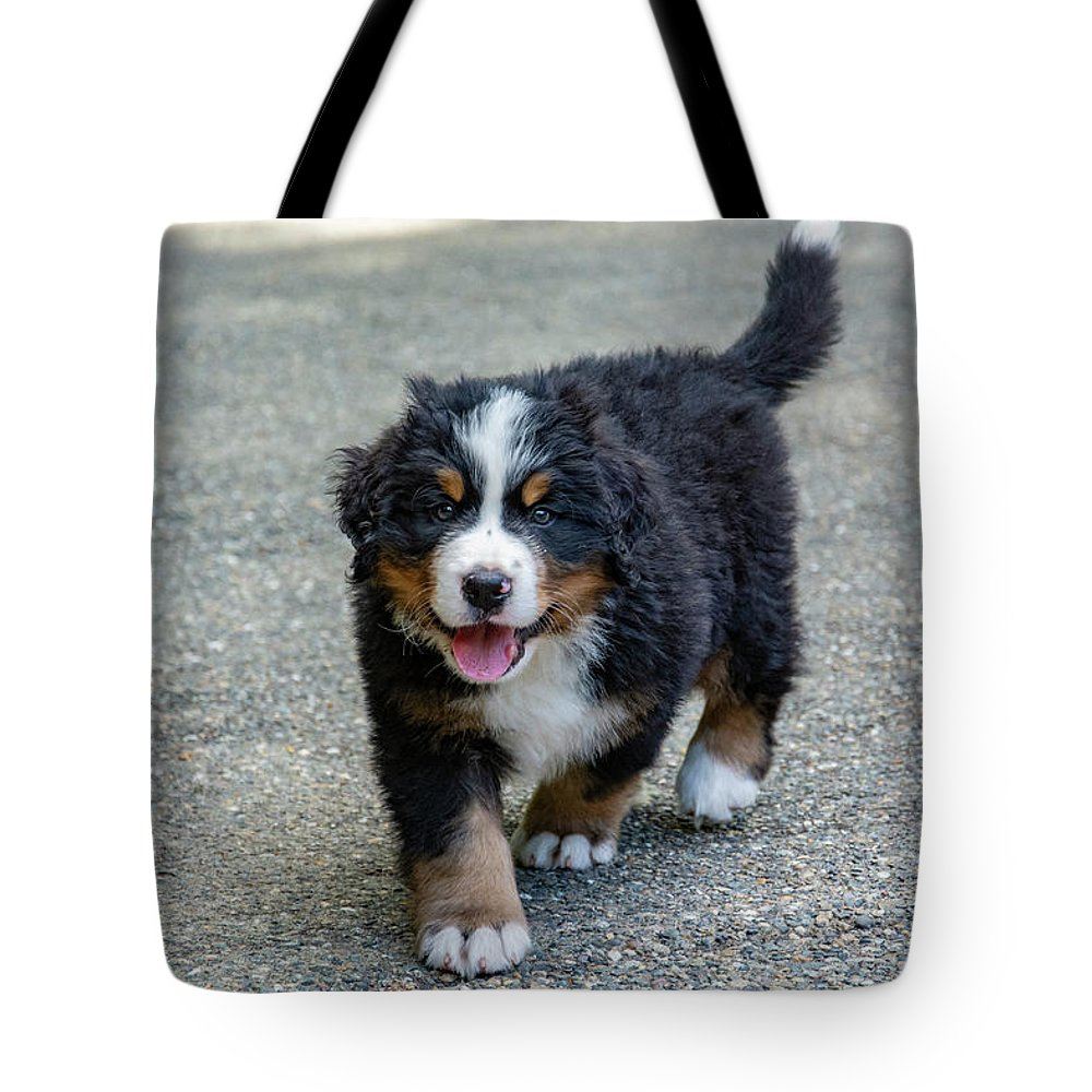 Dog Tote Bag featuring the photograph Bernese Mountain Dog Puppy 2 by Pelo Blanco Photo