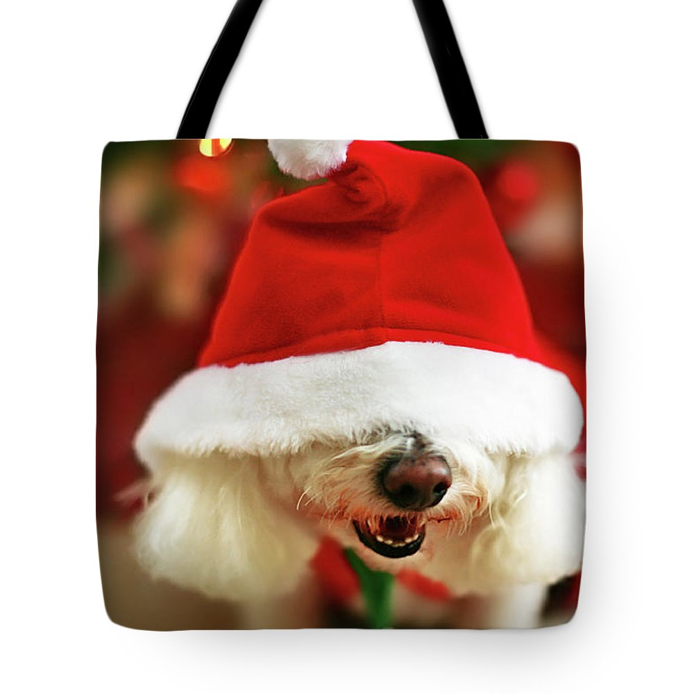 Pets Tote Bag featuring the photograph Bichon Frise Dog In Santa Hat At by Nicole Kucera