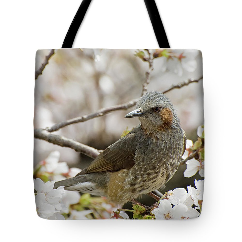 Alertness Tote Bag featuring the photograph Bird Perched Among Cherry Blossoms by Philippe Widling / Design Pics