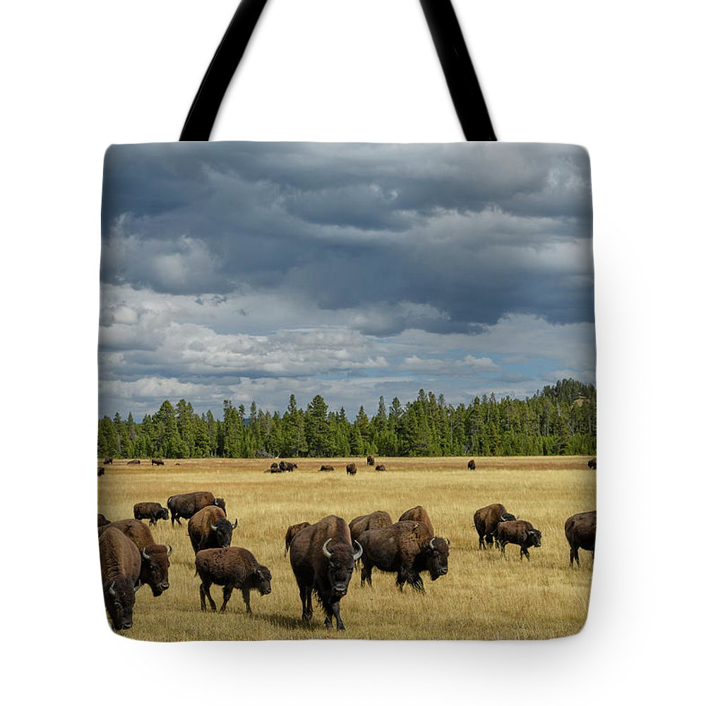 North America Tote Bag featuring the photograph Bison In Yellowstone by Christian Heeb