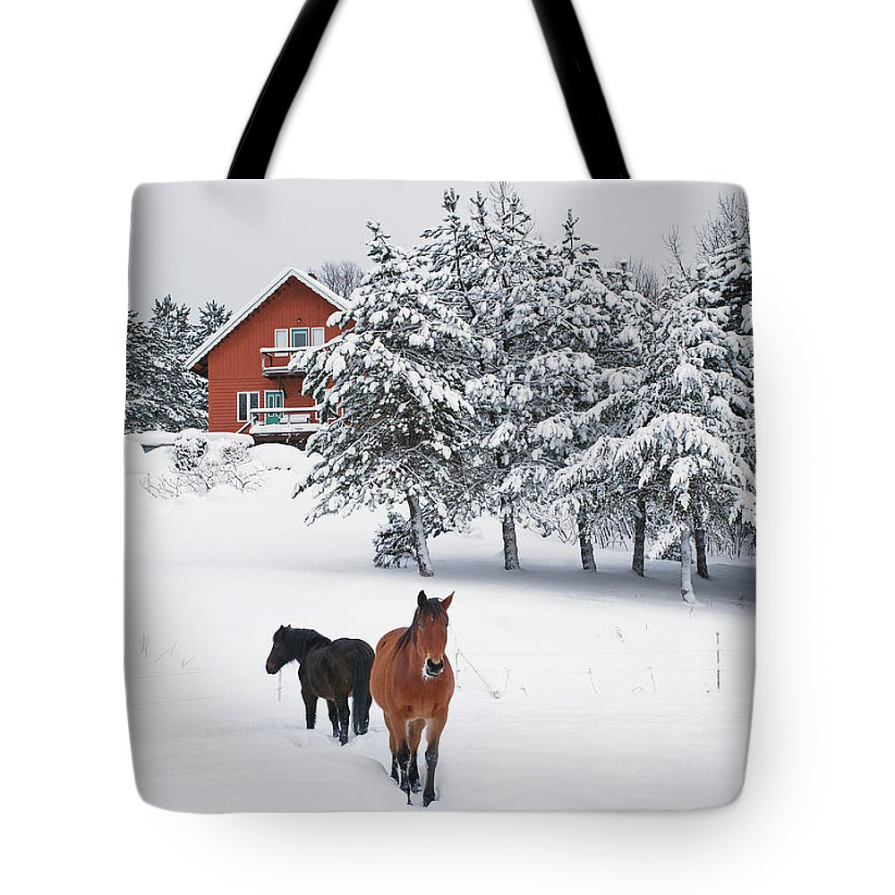 Horse Tote Bag featuring the photograph Black And Brown Horse by Anne Louise Macdonald Of Hug A Horse Farm