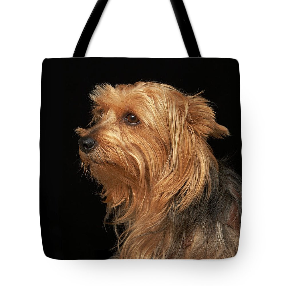 Pets Tote Bag featuring the photograph Black And Brown Yorkie Left Profile On by M Photo
