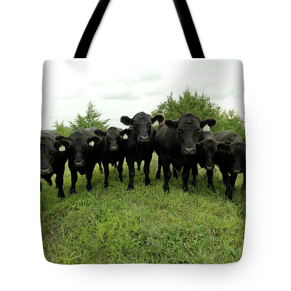 Grass Tote Bag featuring the photograph Black Angus Cows by Xpacifica