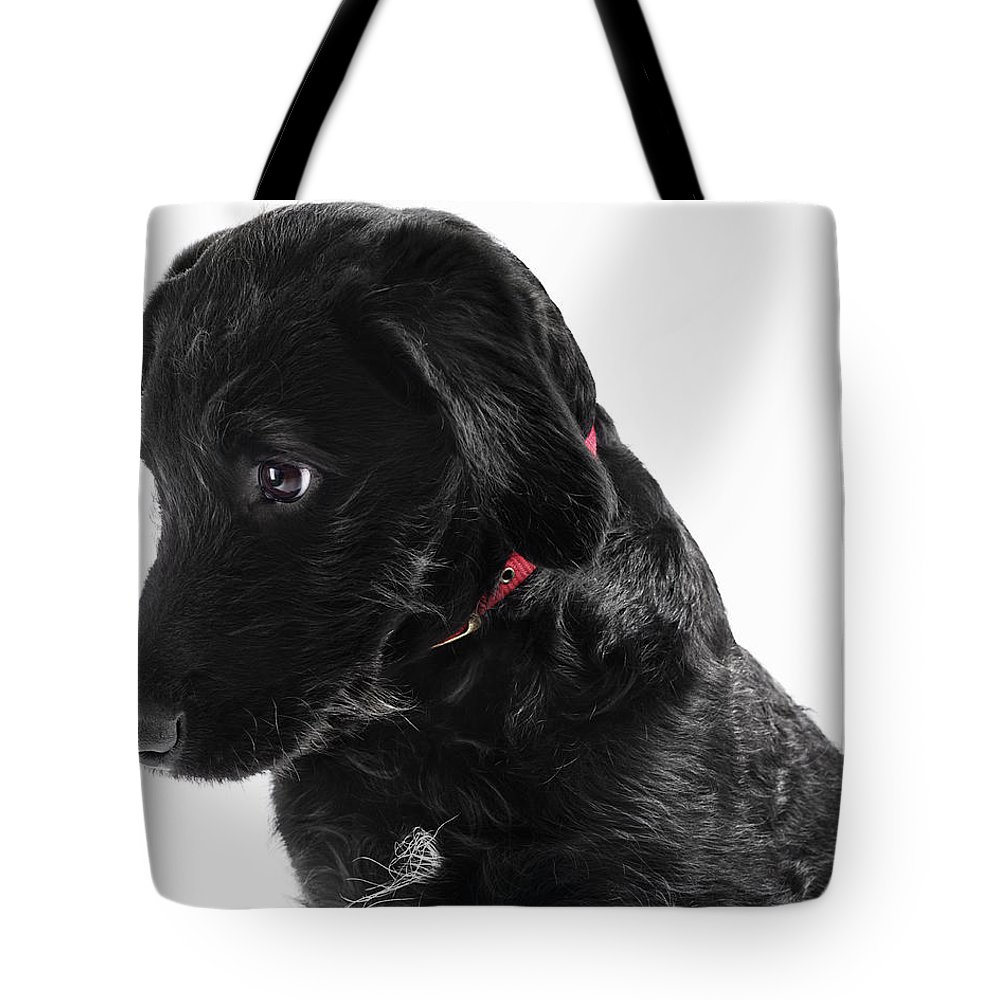 Pets Tote Bag featuring the photograph Black Labradoodle by Gandee Vasan