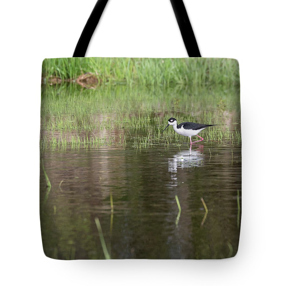 Black-necked Stilt (himantopus Mexicanus) Tote Bag featuring the photograph Black-necked Stilt 2018-1 by Thomas Young