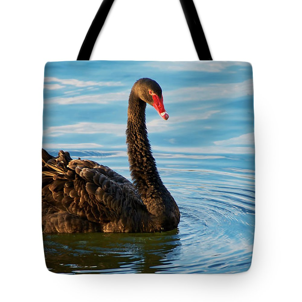 Black Swan Tote Bag featuring the photograph Black Swan Making Ripples by Zayne Diamond Photographic