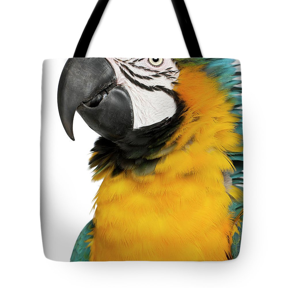 Macaw Tote Bag featuring the photograph Blue And Yellow Macaw, Ara Ararauna by Life On White