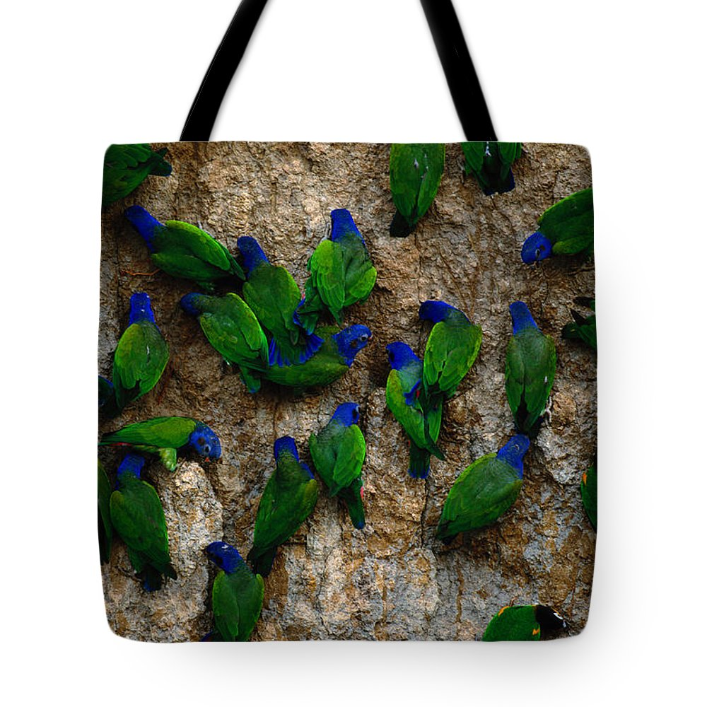 Blue Headed Parrot Tote Bag featuring the photograph Blue-headed And Barrabands Parrots by Art Wolfe