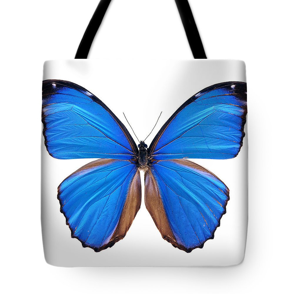Amazon Rainforest Tote Bag featuring the photograph Blue Morpho Butterfly - Large by Phototalk