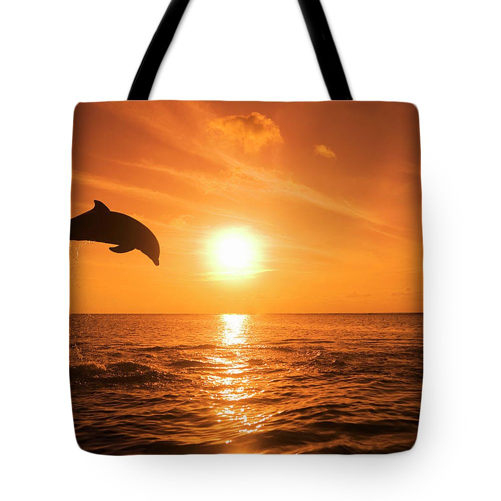 Orange Color Tote Bag featuring the photograph Bottlenose Dolphin Tursiops Truncatus by Rene Frederick
