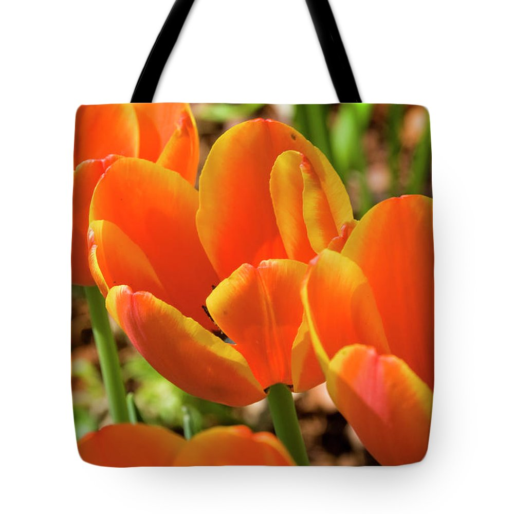 Flowerbed Tote Bag featuring the photograph Bright Orange Tulips by Earleliason