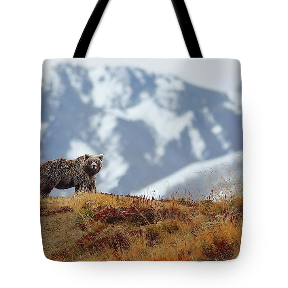 Brown Bear Tote Bag featuring the photograph Brown Bear by Zahoor Salmi