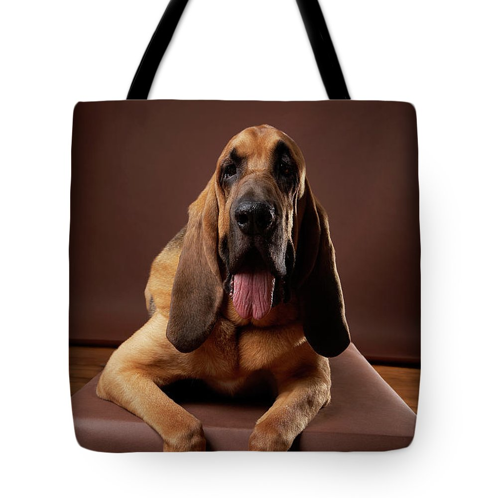 Pets Tote Bag featuring the photograph Brown Bloodhound Dog Lying On Bench by Chris Amaral