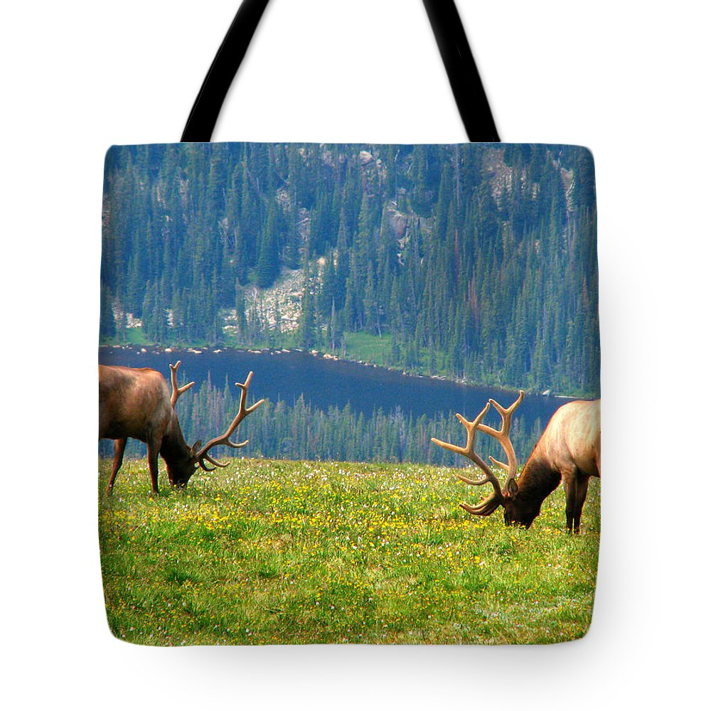 Grass Tote Bag featuring the photograph Bull Elk Grazing In Colorado by Sandra Leidholdt