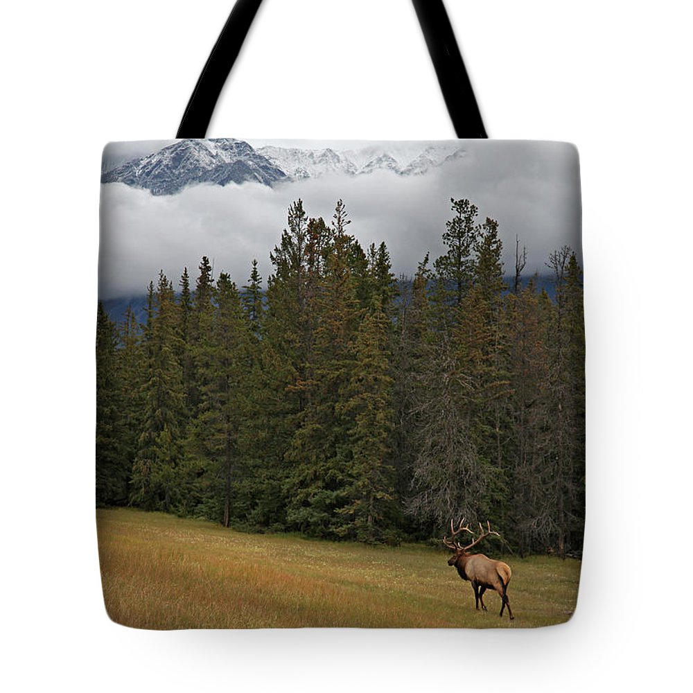 Snow Tote Bag featuring the photograph Bull Elk In Meadow With Snow Covered by Guy Crittenden
