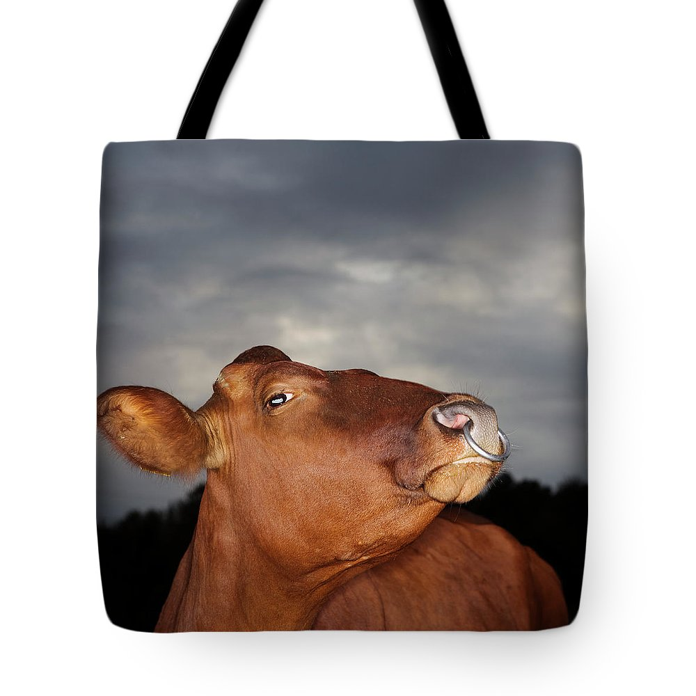 Sweden Tote Bag featuring the photograph Bull In Evening Light by Roine Magnusson