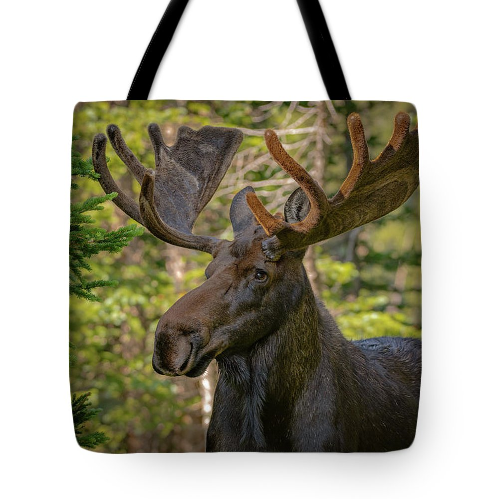 Moose Tote Bag featuring the photograph Bull Moose Glamour Shot by Gary Kochel