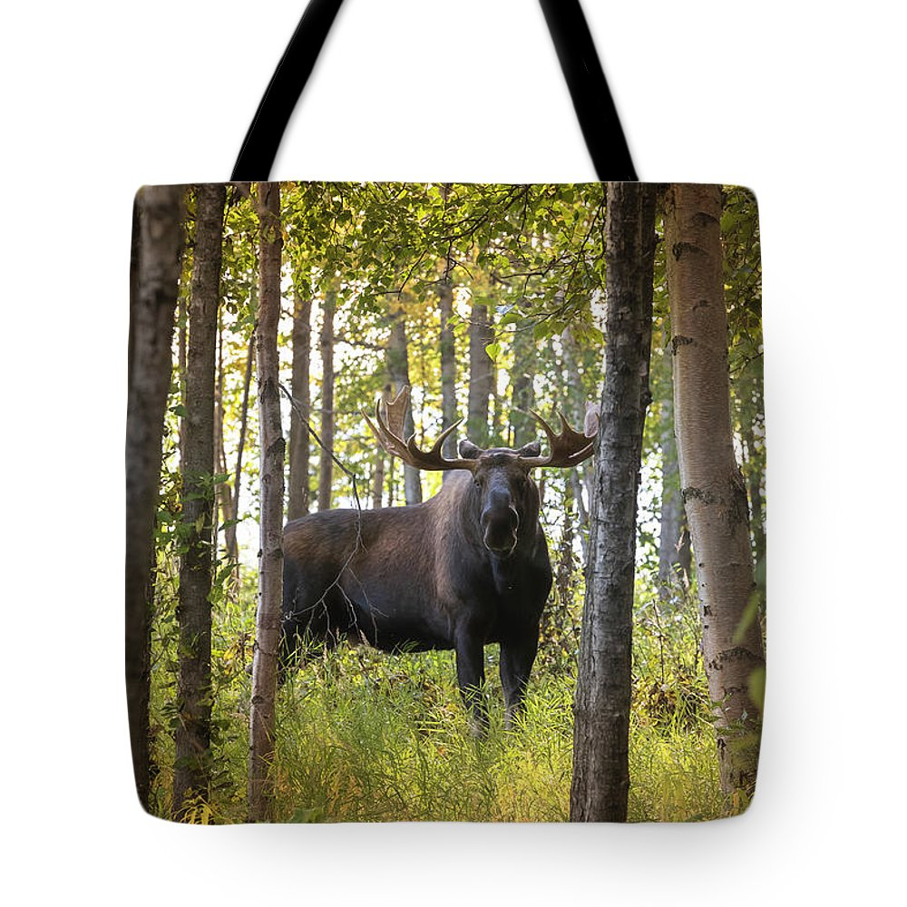 Alaska Tote Bag featuring the photograph Bull Moose In Fall Forest by Scott Slone