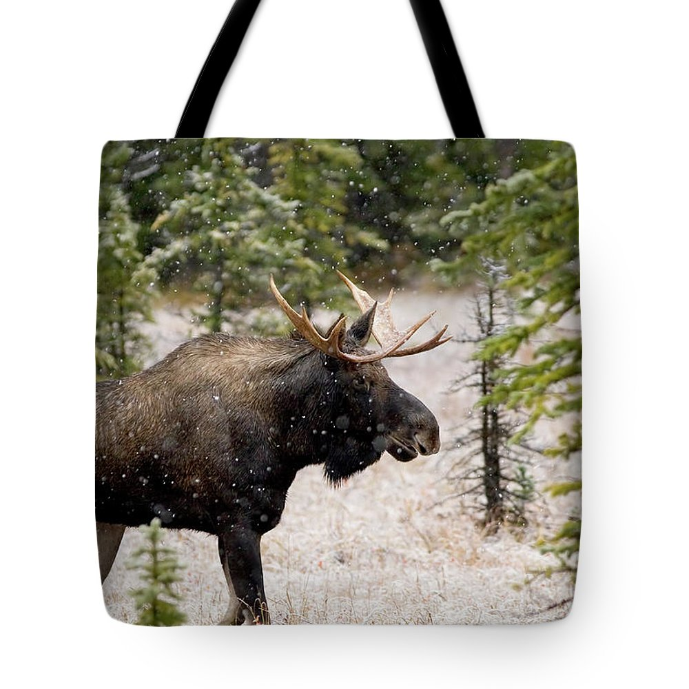 Horned Tote Bag featuring the photograph Bull Moose In Snow Fall by Tulissidesign