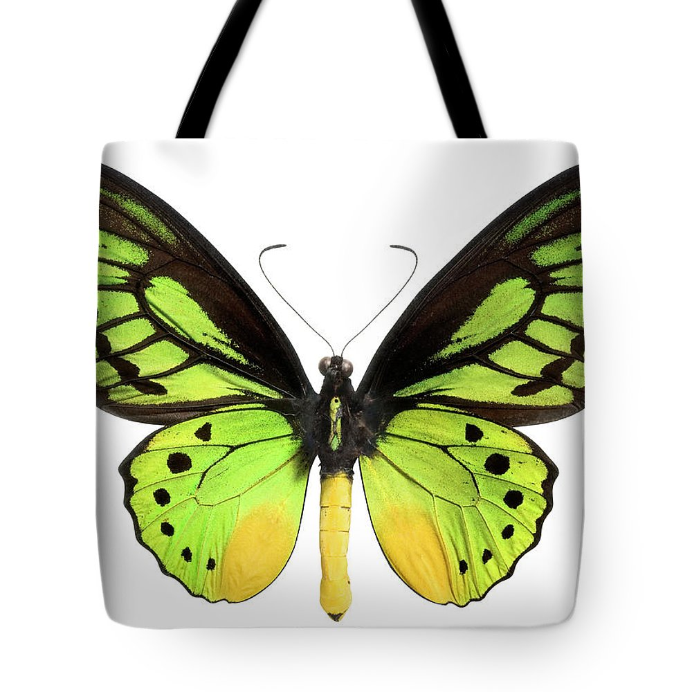 White Background Tote Bag featuring the photograph Butterfly Lepidoptera With Green, Black by Flamingpumpkin
