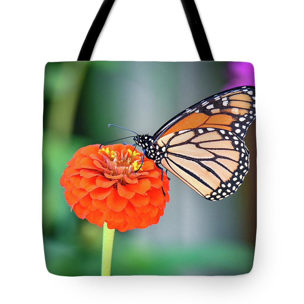 Butterfly Tote Bag featuring the photograph Butterfly by Michelle Wittensoldner