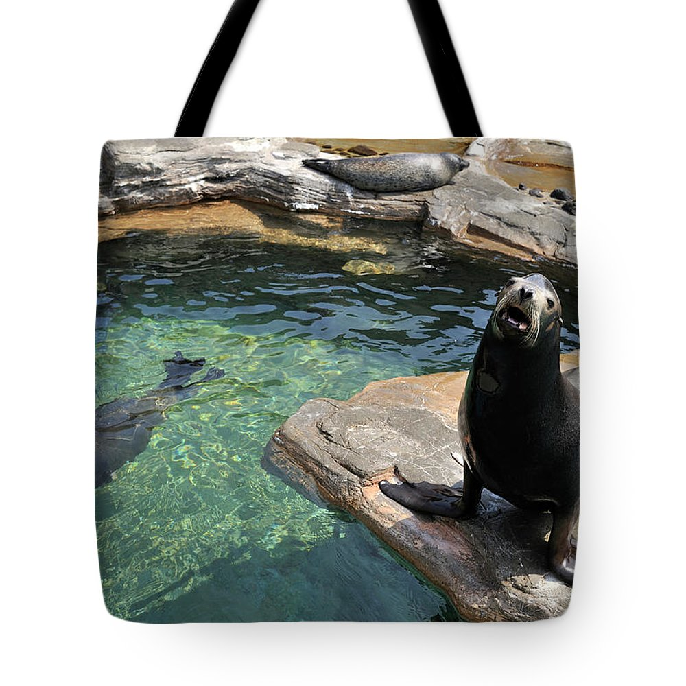 Sea Lion Tote Bag featuring the photograph California Sea Lion And Spotted Seal by T. Nakamura Volvox Inc.