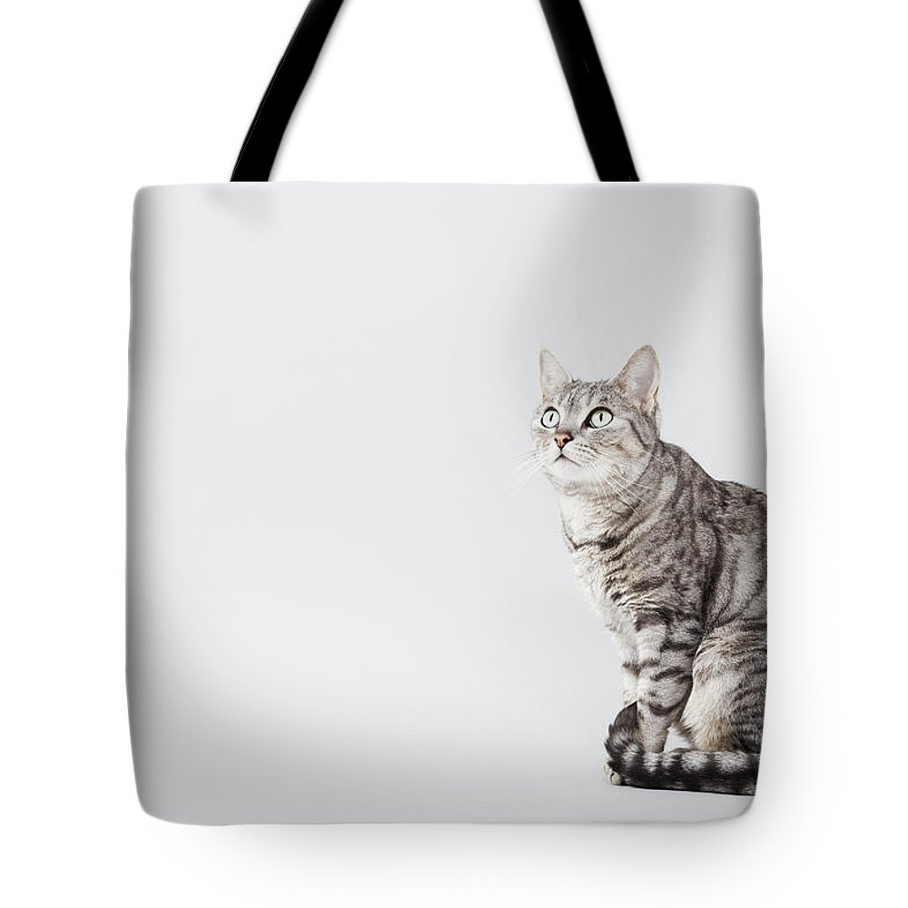 Pets Tote Bag featuring the photograph Cat Looking Up by Lisa Stirling