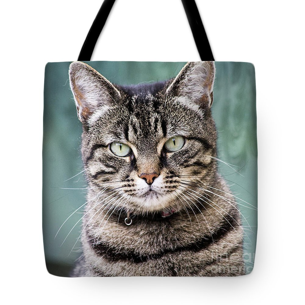 Domestic Cat Tote Bag featuring the photograph Cat Posing For The Camera. by Raymond De la Croix