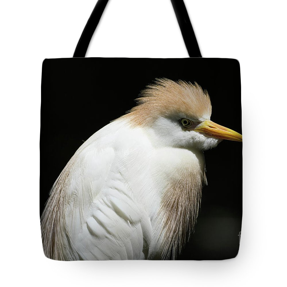 Cattle Egret Lifestyle Products