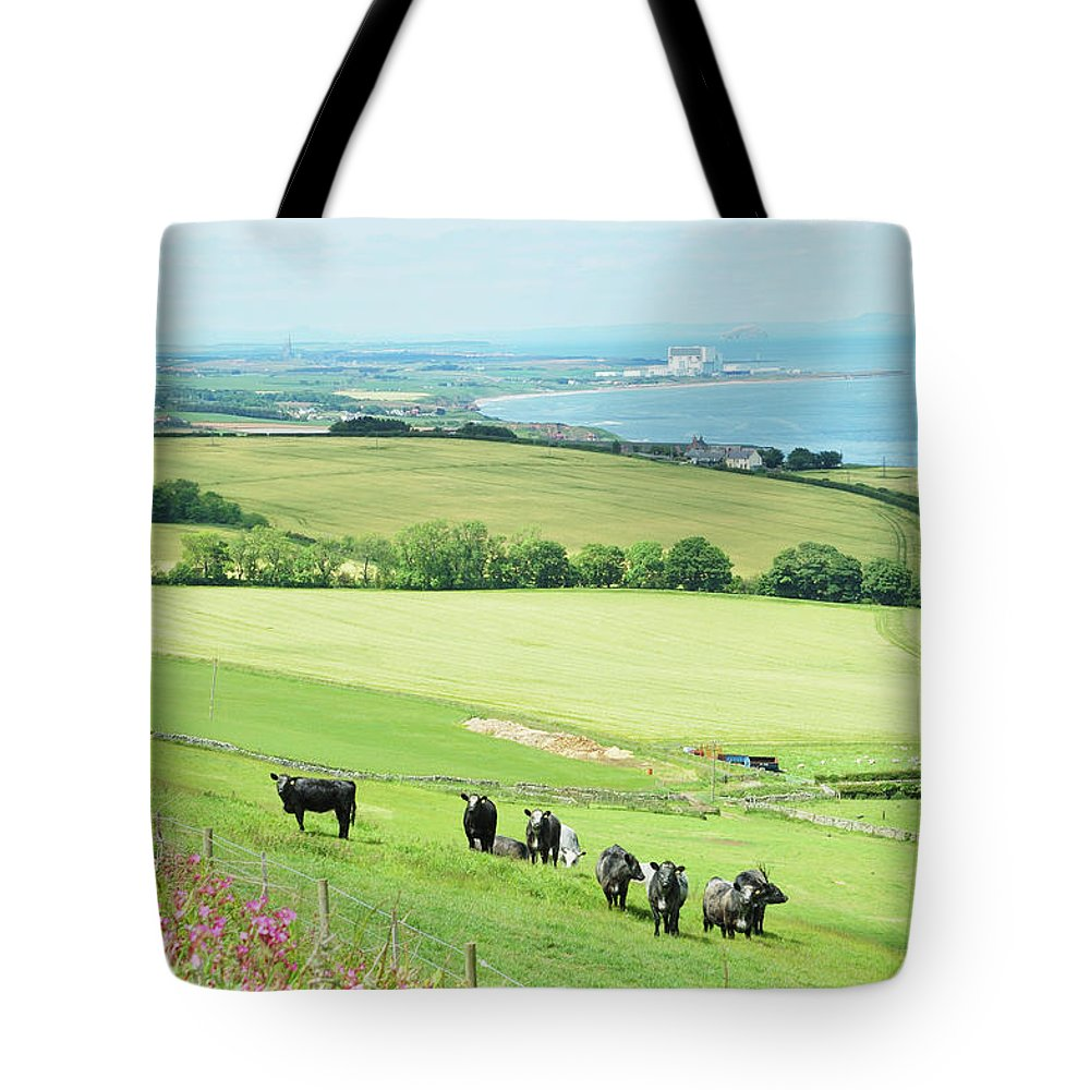 Cattle Tote Bag featuring the photograph cattle in field and east coast Berwickshire by Victor Lord Denovan