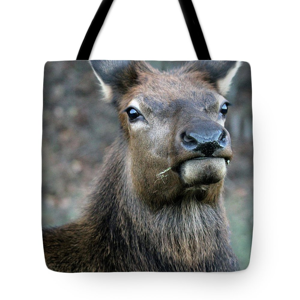 North Carolina Tote Bag featuring the photograph Caught With A Mouthful by Jennifer Robin