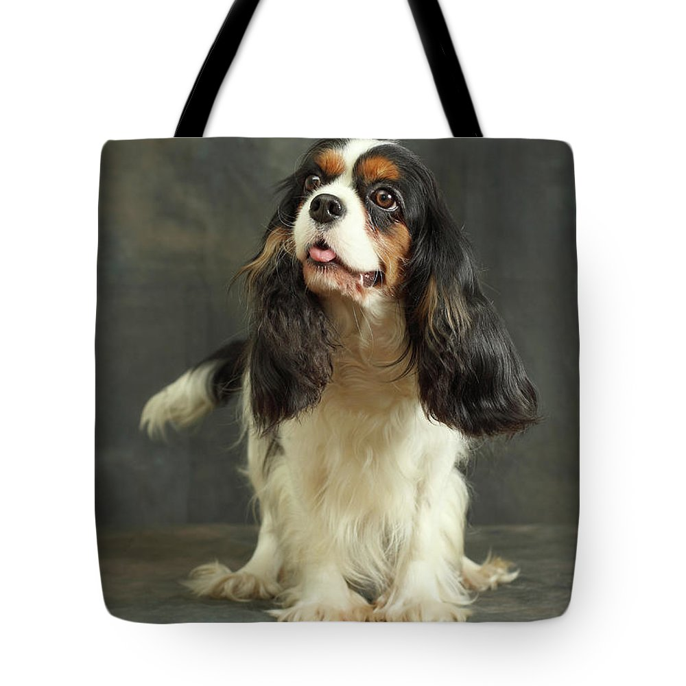 Pets Tote Bag featuring the photograph Cavalier King Charles Spaniel by Sergey Ryumin