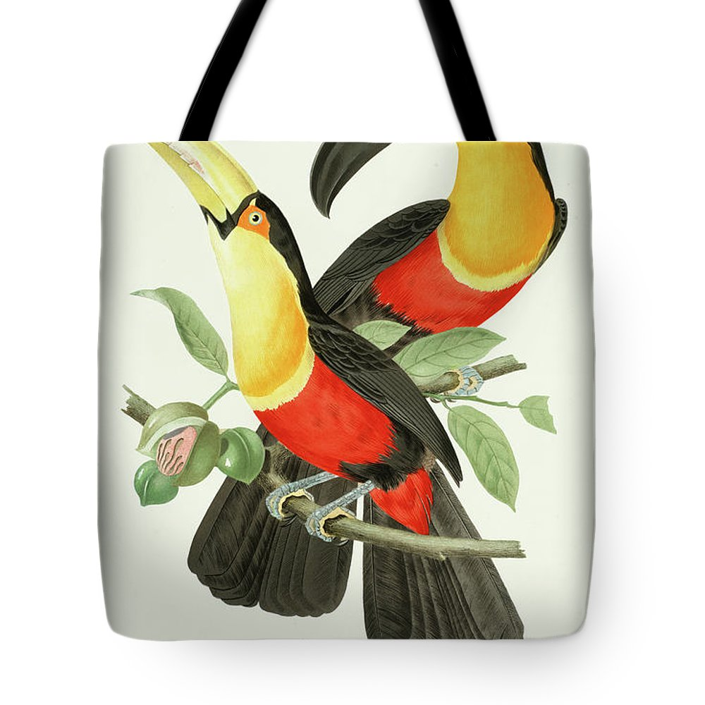 Channel-billed Toucan Tote Bag featuring the painting Channel-billed Toucan by Jean-Theodore Descourtilz