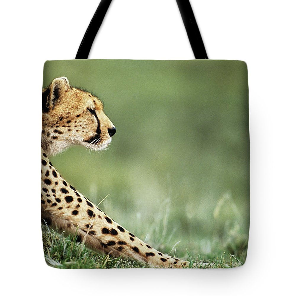 Grass Tote Bag featuring the photograph Cheetah Acinonyx Jubatus Stretching by Anup Shah