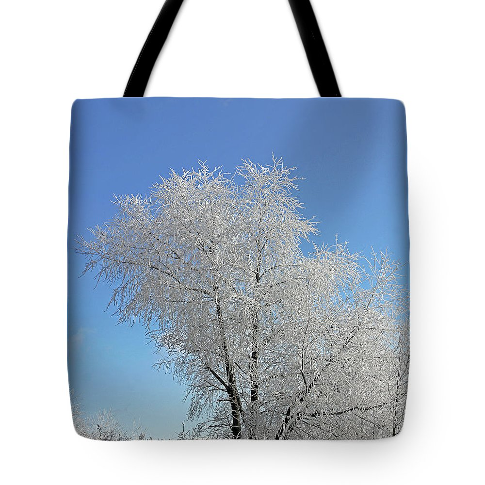 Tree Tote Bag featuring the photograph Cherohala Magic by Jennifer Robin