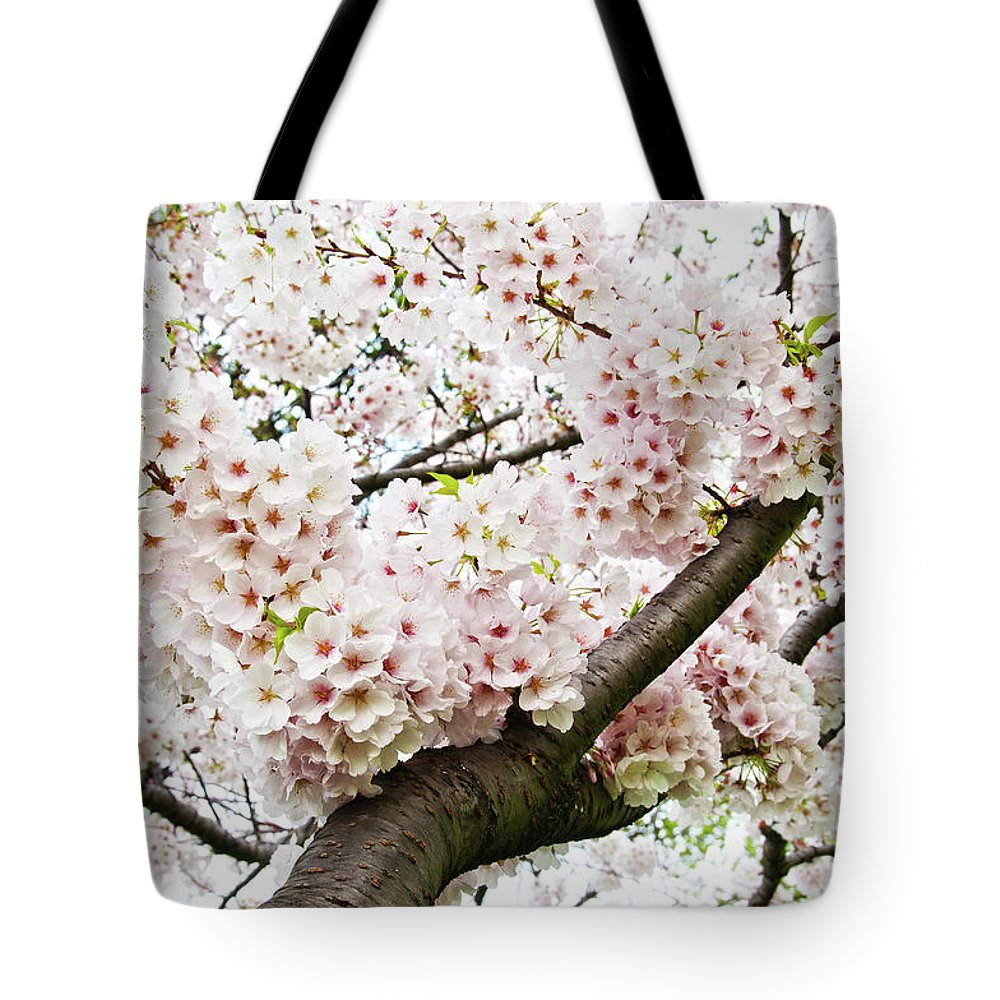 Outdoors Tote Bag featuring the photograph Cherry Blossom by Sky Noir Photography By Bill Dickinson