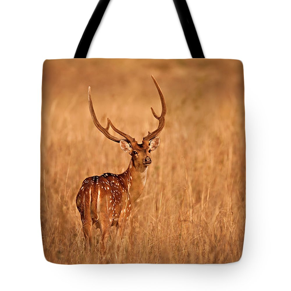 Animal Themes Tote Bag featuring the photograph Chital - Kanha Tiger Reserve by The Eternity Photography -
