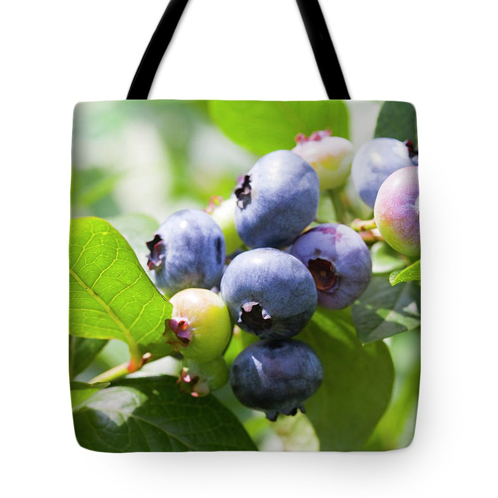 Yamanashi Prefecture Tote Bag featuring the photograph Close-up Of Blueberry Plant And Berries by Daisuke Morita
