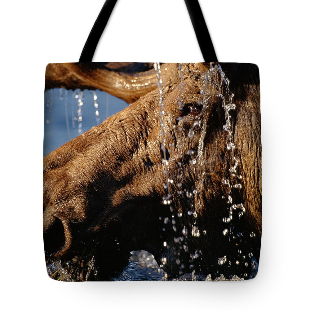 Male Animal Tote Bag featuring the photograph Close-up Of Bull Moose Alces Alces With by Eastcott Momatiuk