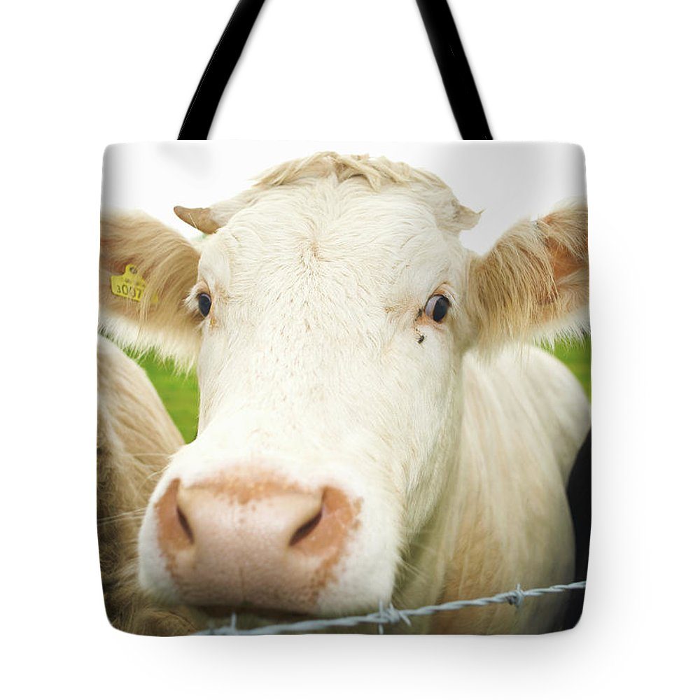 Free Range Tote Bag featuring the photograph Close Up Of Cows Face by Peter Muller