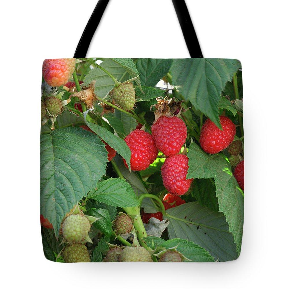 Non-urban Scene Tote Bag featuring the photograph Close-up Ripening Organic Raspberries by Gomezdavid