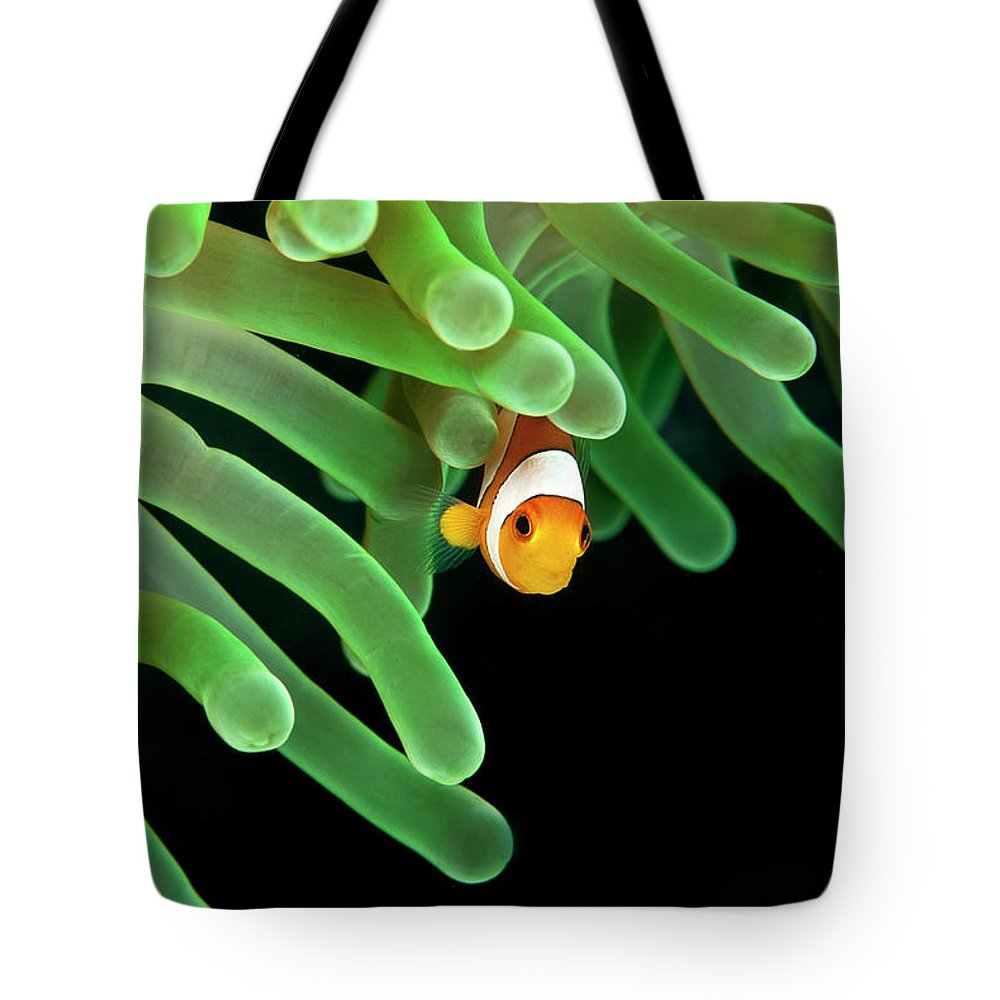 Underwater Tote Bag featuring the photograph Clownfish On Green Anemone by Alastair Pollock Photography