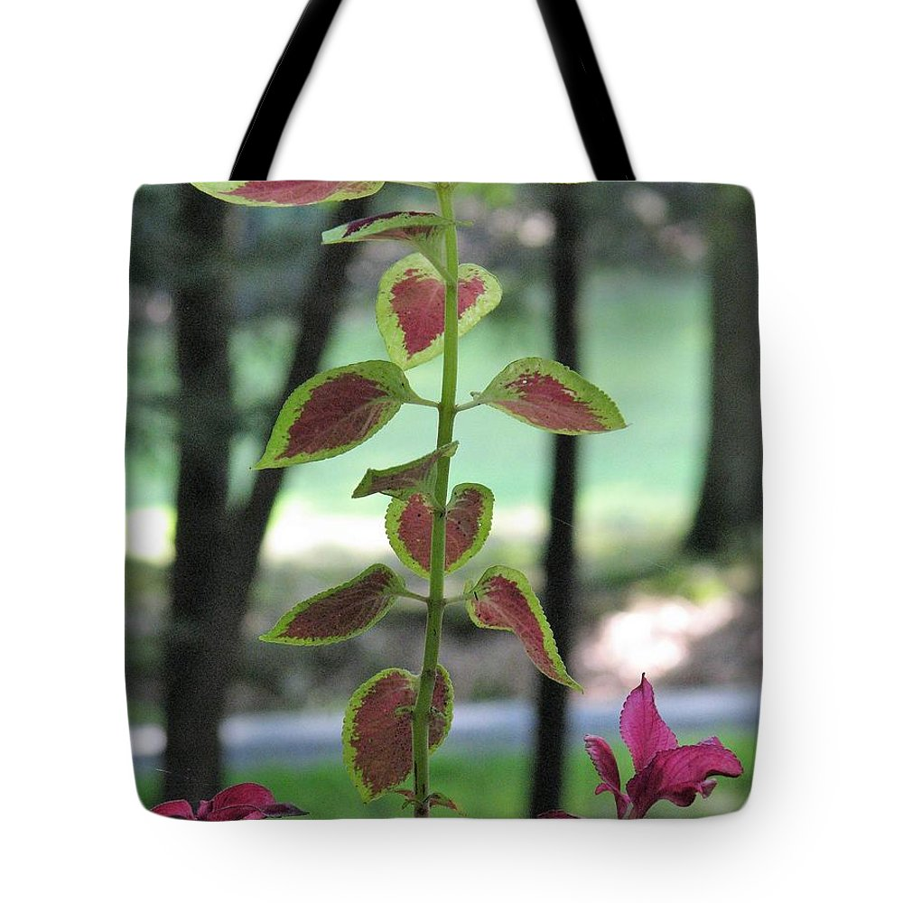 Tote Bag featuring the photograph Coleus by Jennifer Gilman