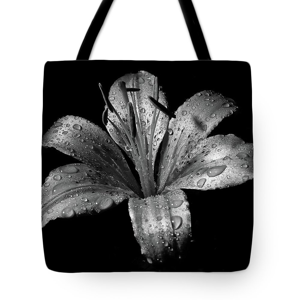 Black Background Tote Bag featuring the photograph Collection by Photograph By Ryan Brady-toomey