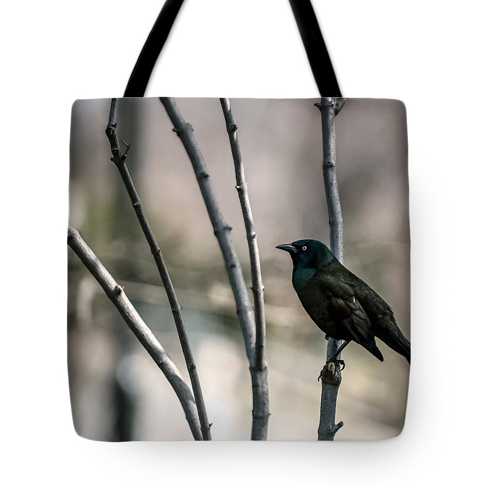 Animal Themes Tote Bag featuring the photograph Common Grackle by By Ken Ilio