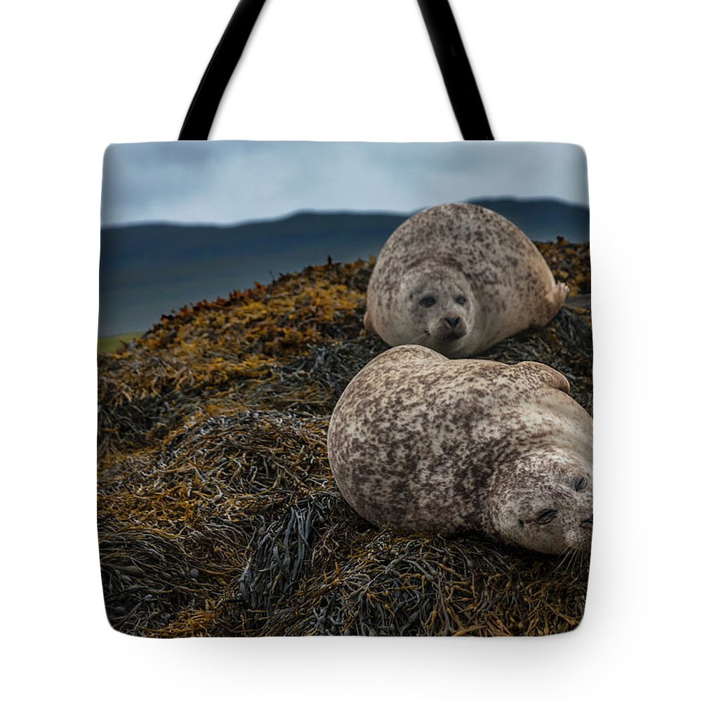 Seaweed Tote Bag featuring the photograph Common Seals, Loch Dunvegan, Isle Of by Diane Macdonald