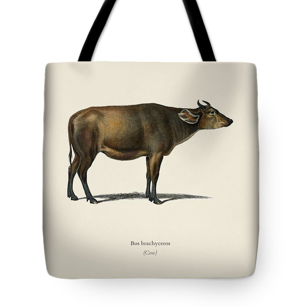 Animal Tote Bag featuring the painting Cow Bos Brachyceros Illustrated By Charles Dessalines D' Orbigny 1806-1876 by Celestial Images