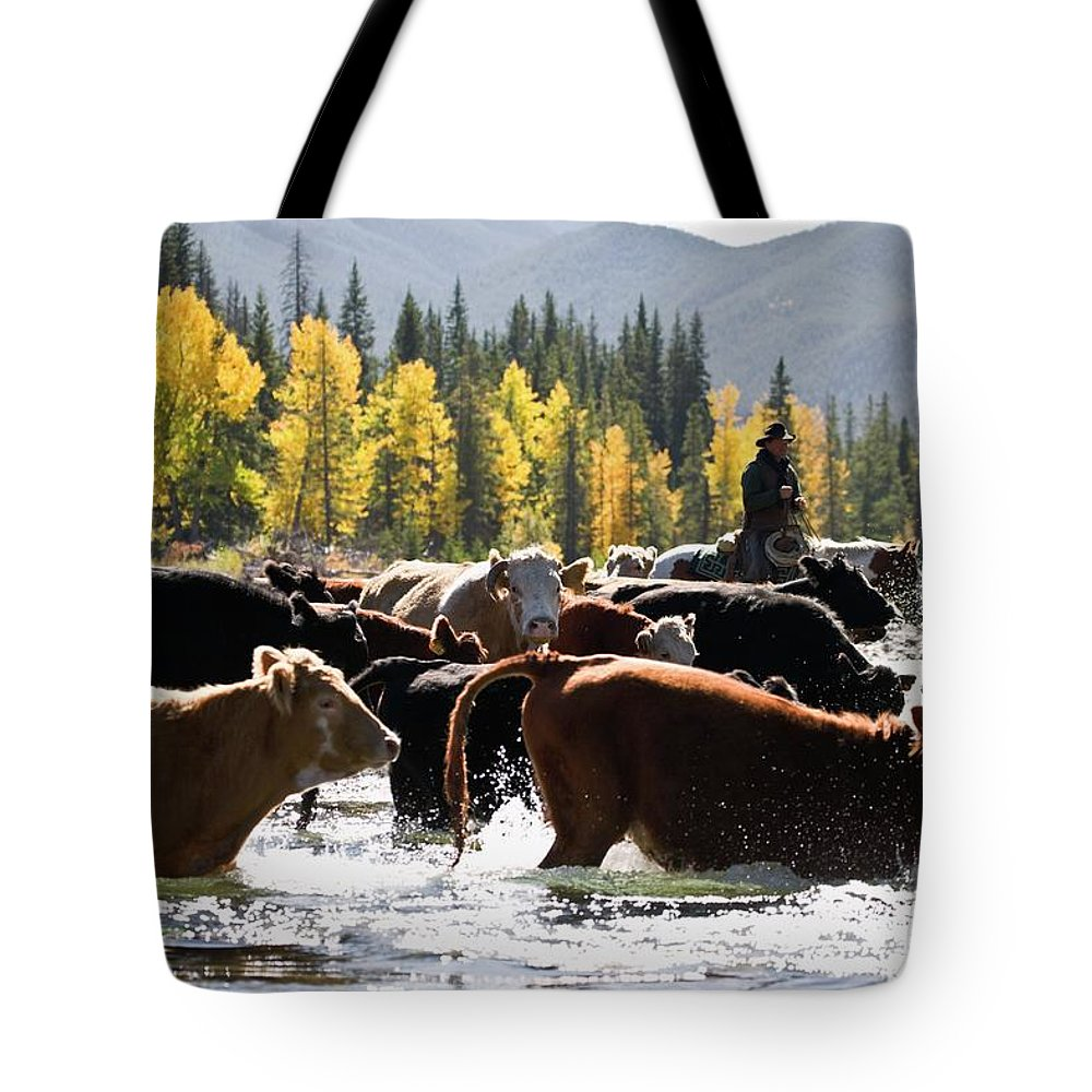 People Tote Bag featuring the photograph Cowboy Herding Cattle Across River by Design Pics/carson Ganci