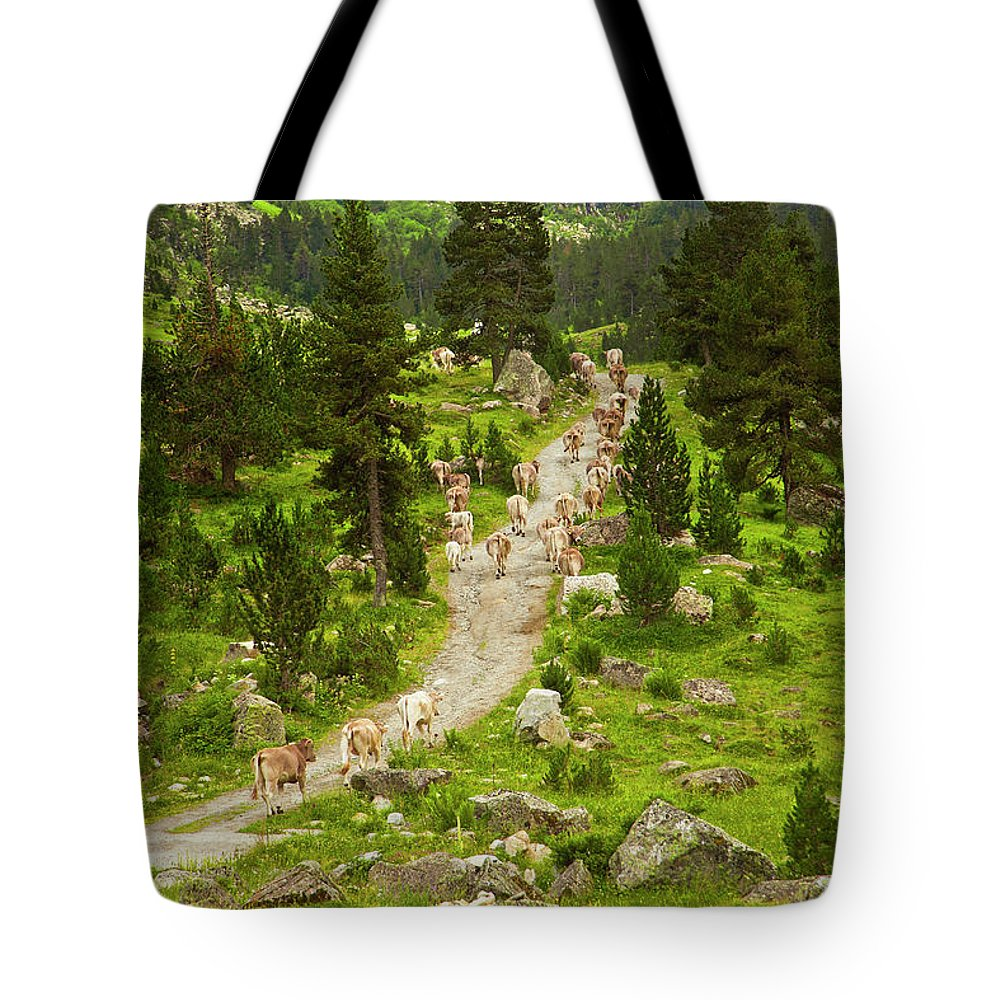 Catalonia Tote Bag featuring the photograph Cows Walking In Catalan Pyrenees by Gonzalo Azumendi